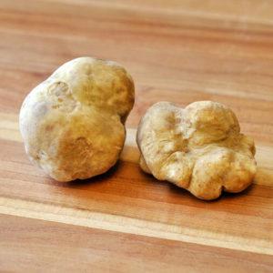 Truffles Mushroom